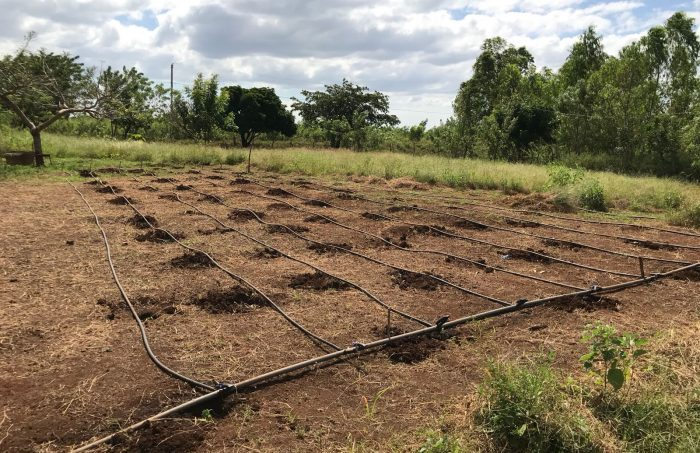 Drip Irrigation Systems for Nicaraguan Farmers - Centre for Global
